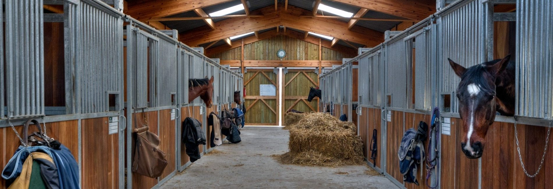 3 Tipps, wie du die Coronakrise mit Pferd meisterst