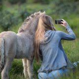 3 Tipps für perfekte Pferdefotos mit dem Smartphone