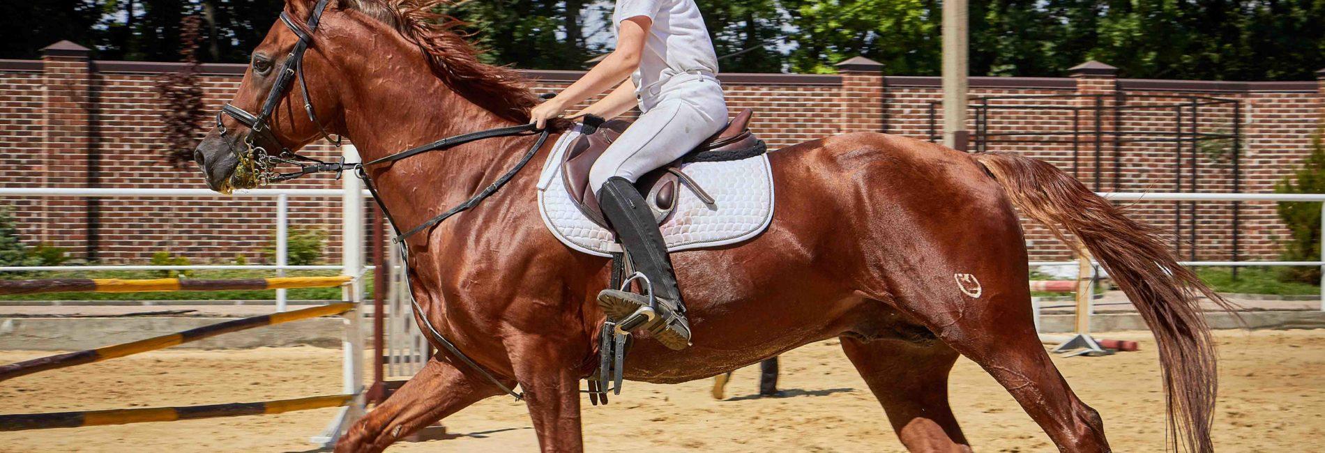 Gamaschen – der richtige Schutz für das Pferdebein