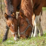 Pferdefütterung – Welche Futtermittel gibt es beim Pferd?